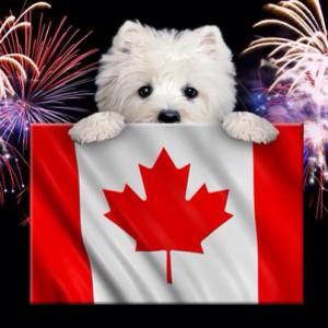 Canada Day Pooch
